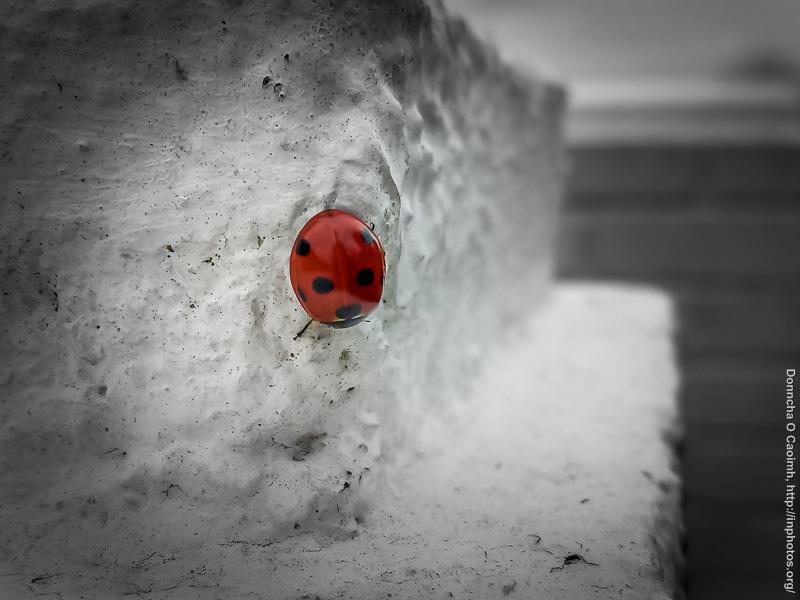 An Autumn Ladybird