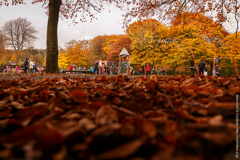 The Golden Shades of Autumn