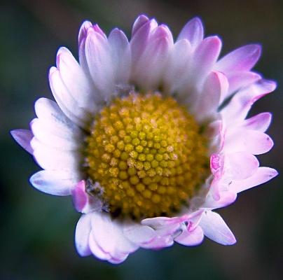 photoblog-20050222