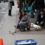 2005-05-16_duck_shoot_2024