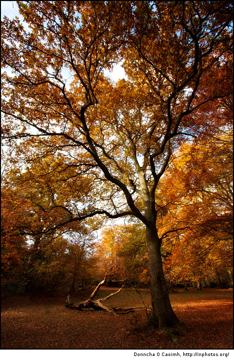 The beauty of Burnham Beeches