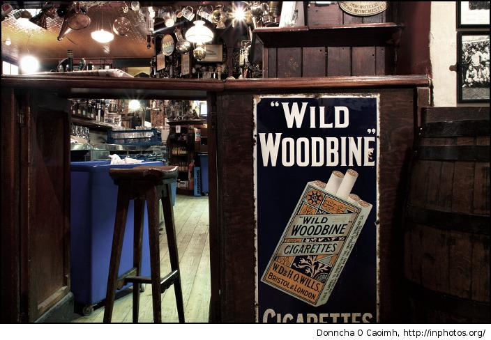 wild woodbine