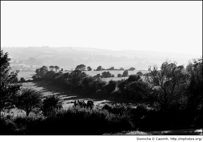 Hedges and Fields