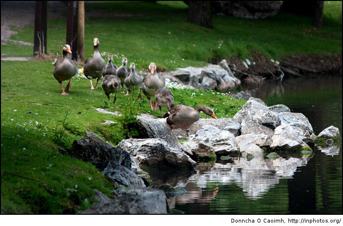 Like ducks to water