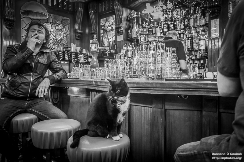 dutch-cat-in-a-pub