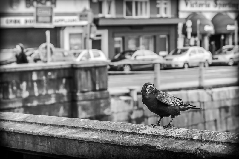 crow-on-bridge