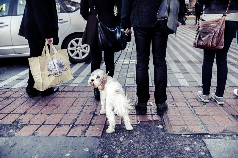 urban-dog