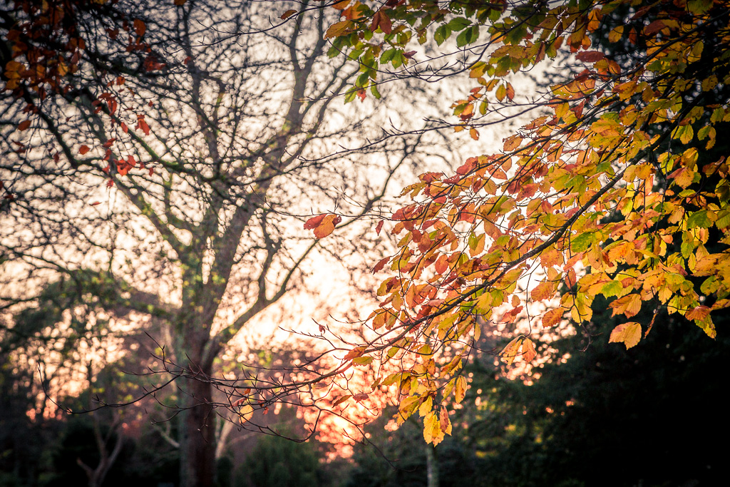 tree-leaves-at-sunset