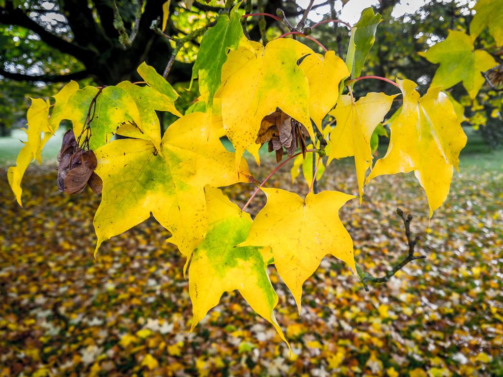 autumn-in-blarney-castle