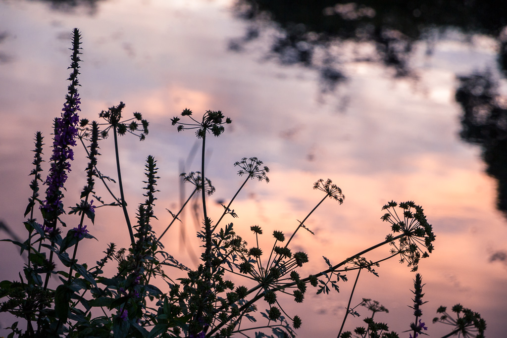 Flowers over a Sunset River
