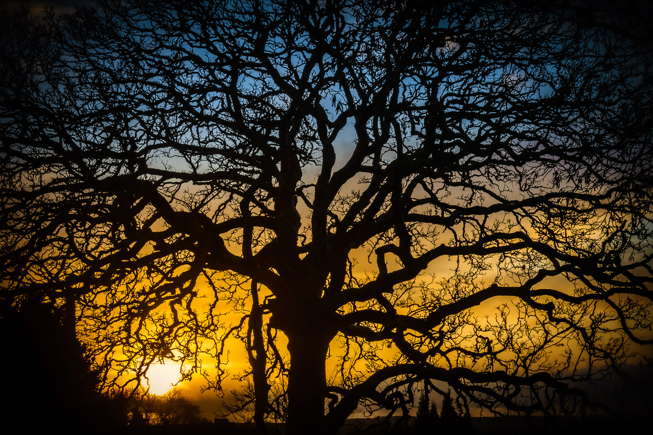 Sunrise Through A Tree