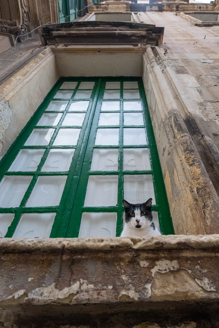 The cat looks down