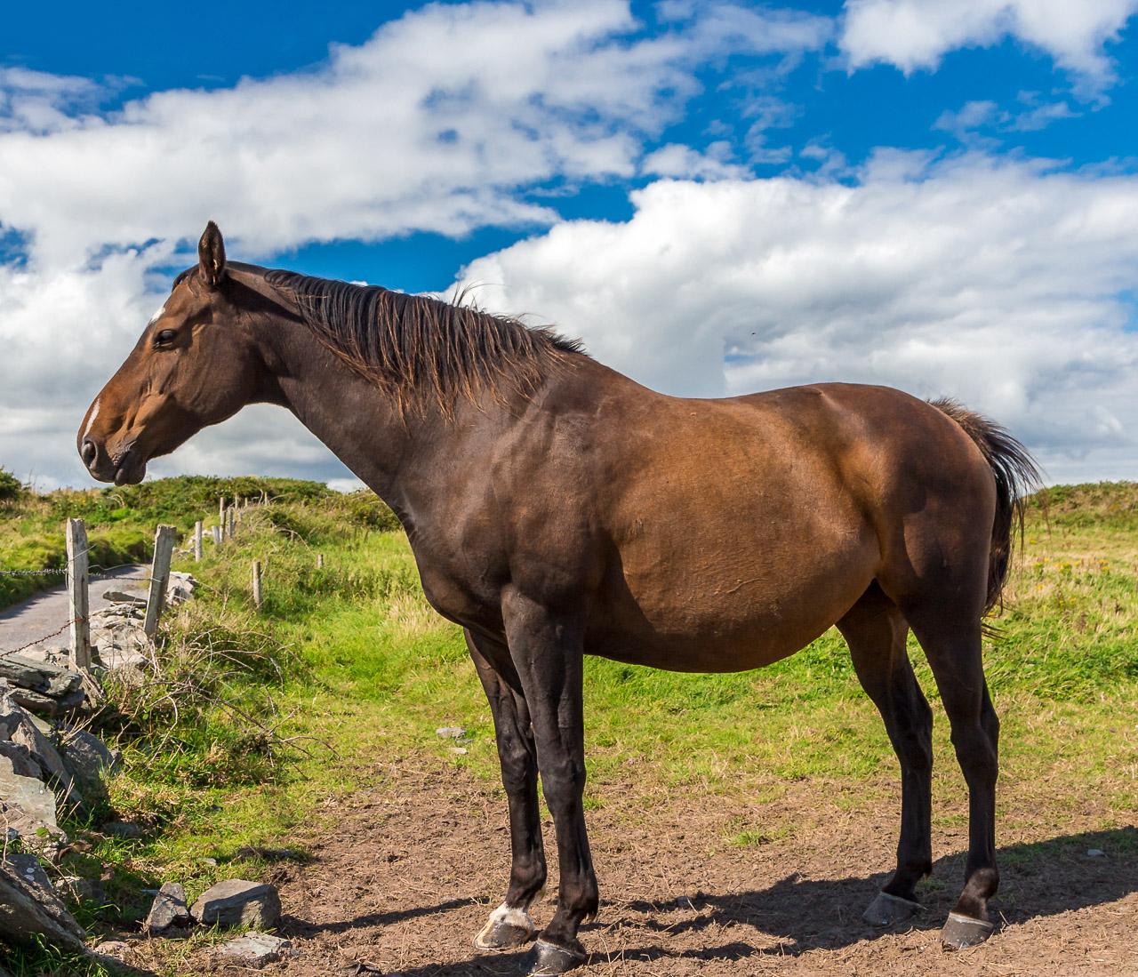 Sherkin Island Horse