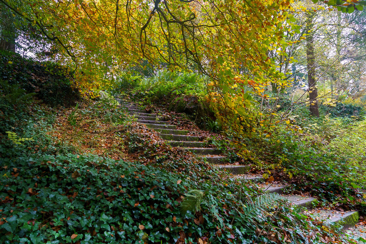 Steps to Nature