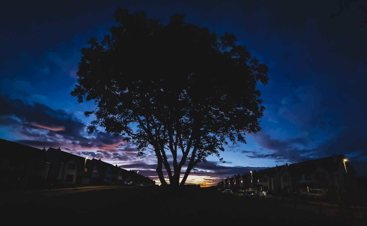 Tree After Sunset