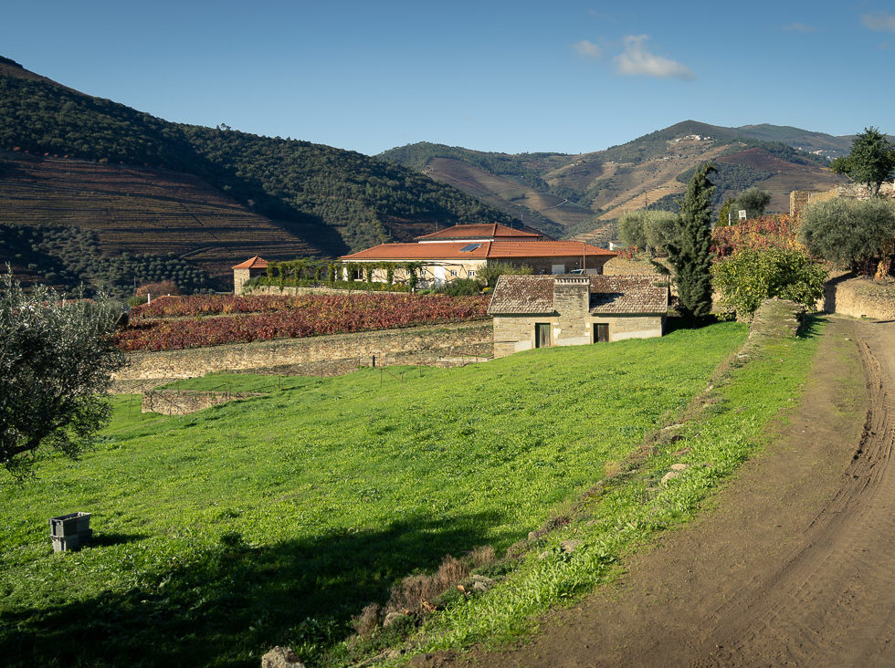 Walking by the vineyard