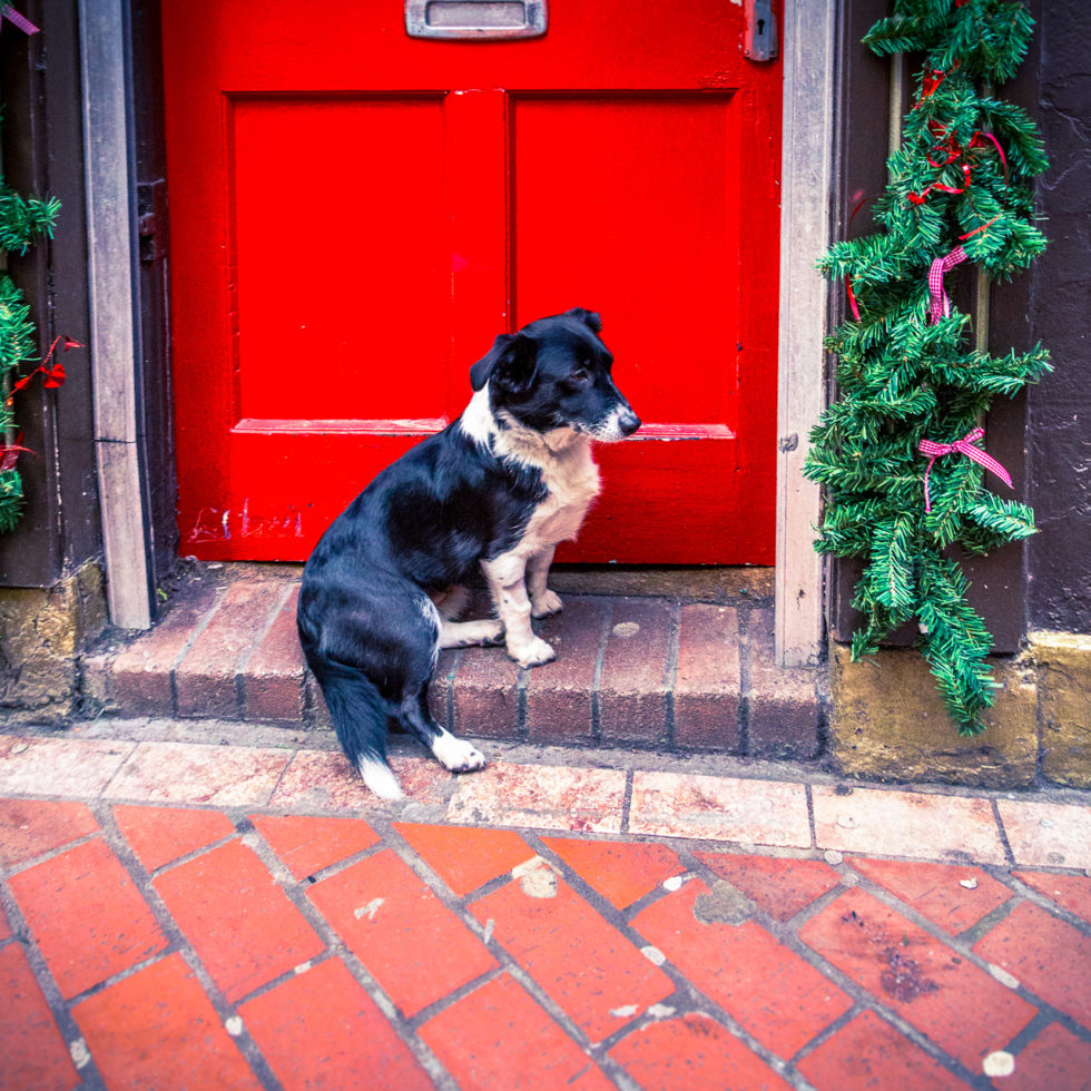 The dog and the red door
