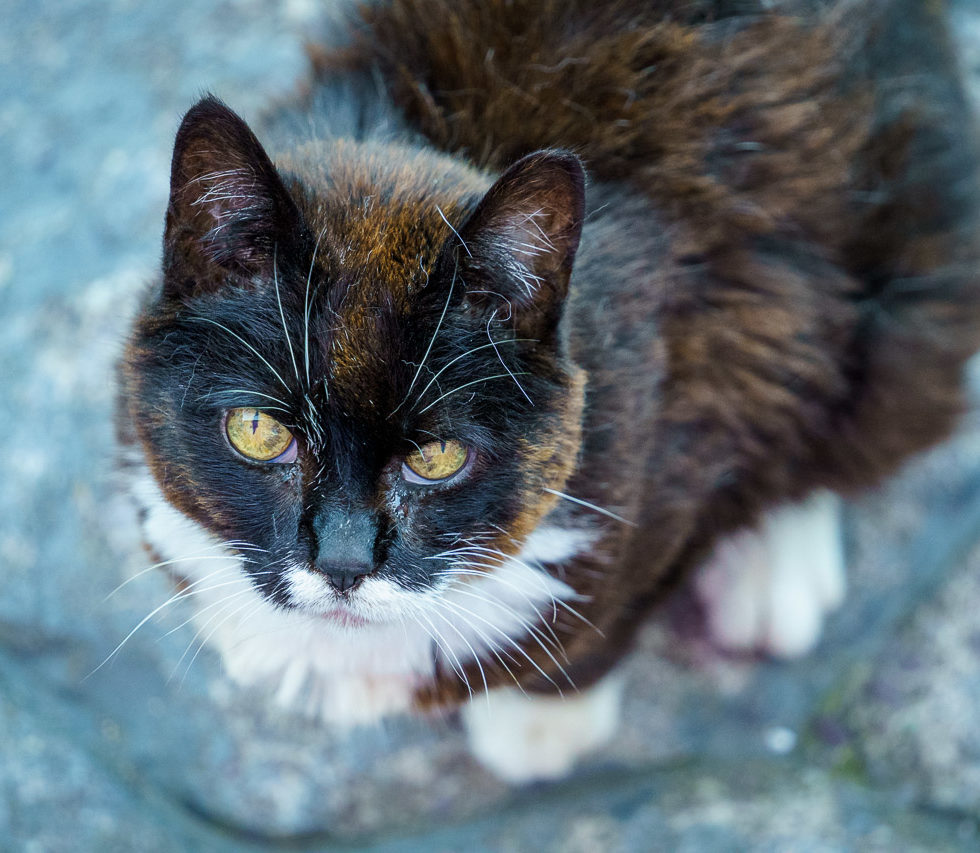 The Mother of our Cats