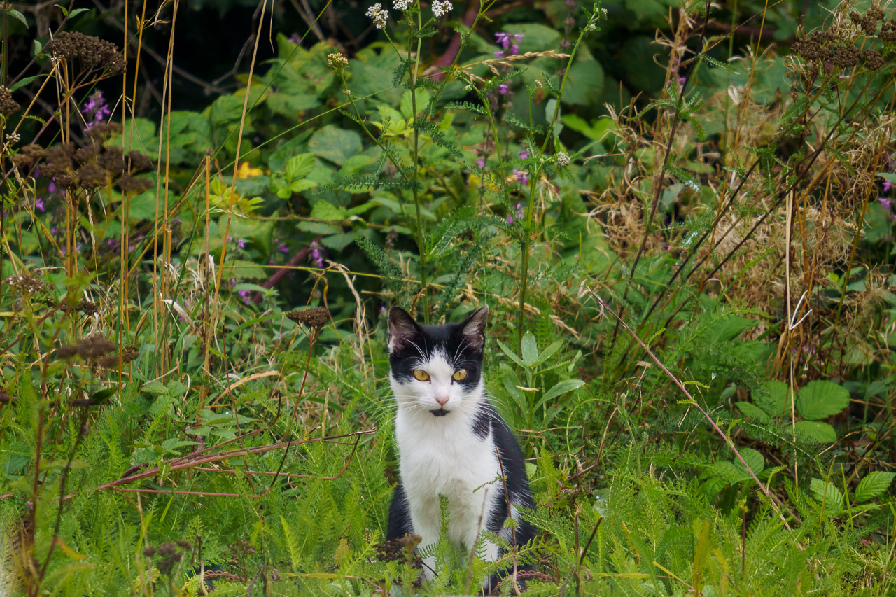 The Cat in the Ditch