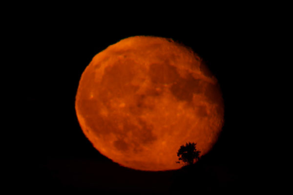 Red Moon and the tree