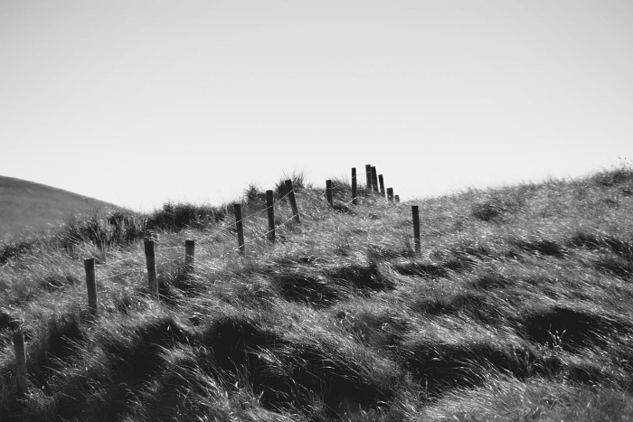 Windswept grass and fence