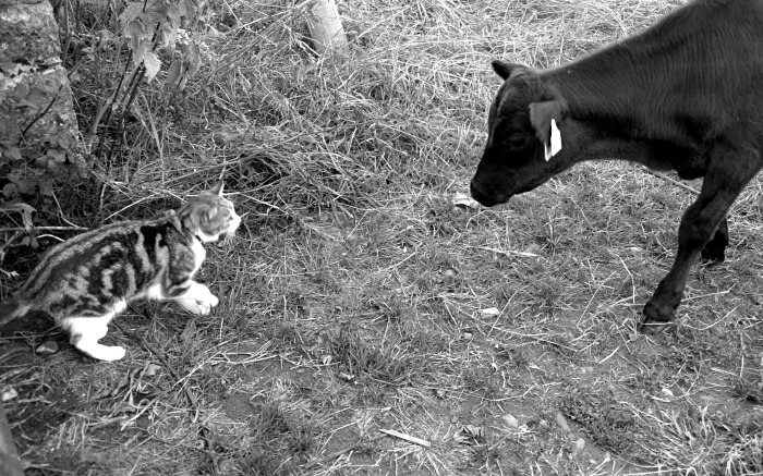 The Puppy and the calf