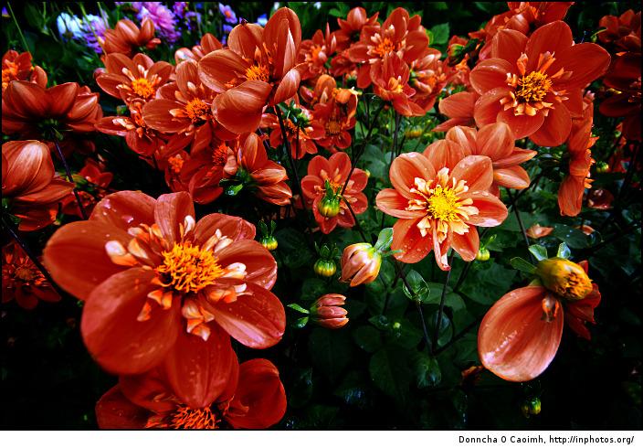 Cvetna oaza - Page 3 Crimson-red-flowers