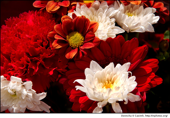 Beautiful flowes crimson red flowers bouquets pictures collection crimson red flowers bouquets pictures collection mightylinksfo Choice Image