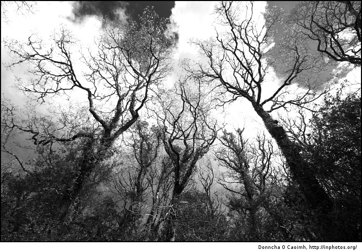 black and white photography trees. Haunted Trees via In Photos